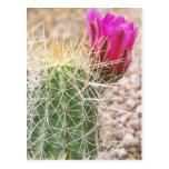 N.A., los E.E.U.U., AZ, Phoenix, abandonan botánic Postales
