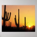 N.A., los E.E.U.U., AZ, Saguaro NP, puesta del sol Impresiones