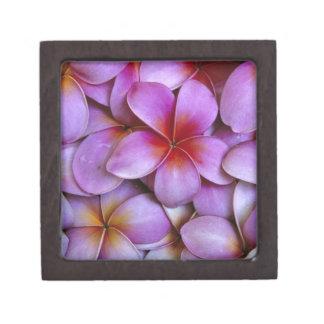 N.A., los E.E.U.U., Maui, Hawaii. Flores rosados d Cajas De Recuerdo De Calidad