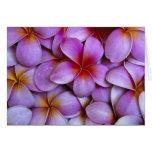 N.A., los E.E.U.U., Maui, Hawaii. Flores rosados d Tarjetón