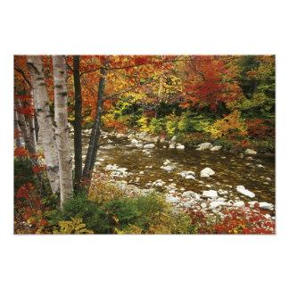 N.A., los E.E.U.U., New Hampshire, montañas blanca Impresión Fotográfica