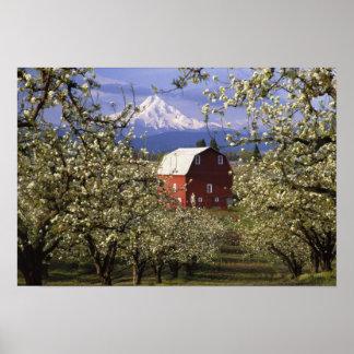 N.A., los E.E.U.U., Oregon, el condado de Hood Riv Poster
