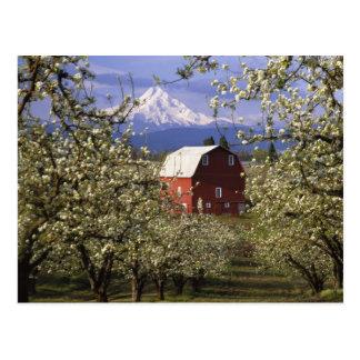 N.A., los E.E.U.U., Oregon, el condado de Hood Riv Tarjetas Postales