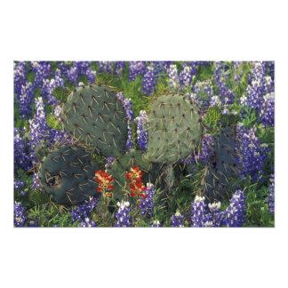 N.A., los E.E.U.U., Tejas, cactus rodeado cerca Cojinete