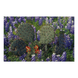 N.A., los E.E.U.U., Tejas, cactus rodeado cerca Impresiones