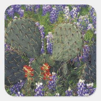 N.A., los E.E.U.U., Tejas, cactus rodeado cerca Pegatina Cuadradas