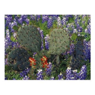 N.A., los E.E.U.U., Tejas, cactus rodeado cerca Postal
