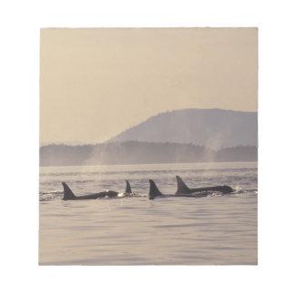 N.A., orca de los E.E.U.U., Washington, islas de S Libretas Para Notas