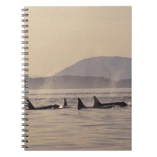 N.A., orca de los E.E.U.U., Washington, islas de S Libro De Apuntes
