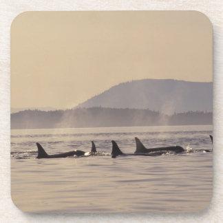 N.A., orca de los E.E.U.U., Washington, islas de S Posavasos De Bebidas