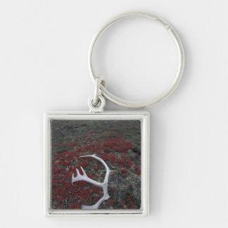 N.A., USA, Alaska, A.N.W.R. Caribou antler lies Key Chains