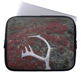 N.A., USA, Alaska, A.N.W.R. Caribou antler lies Laptop Sleeve