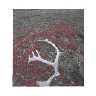 N.A., USA, Alaska, A.N.W.R. Caribou antler lies Note Pad