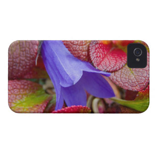 N.A., USA, Alaska.  Bluebell in the tundra in iPhone 4 Cover