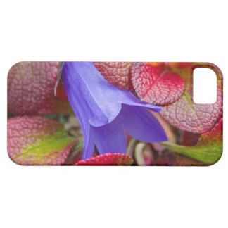 N.A., USA, Alaska.  Bluebell in the tundra in iPhone 5 Cases