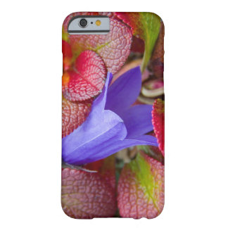 N.A., USA, Alaska.  Bluebell in the tundra in Barely There iPhone 6 Case