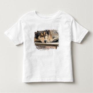 N.A., USA, Alaska. Husky sled dogs at 2 Toddler T-shirt