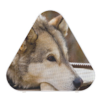 N.A., USA, Alaska. Husky sled dogs at 3 Bluetooth Speaker