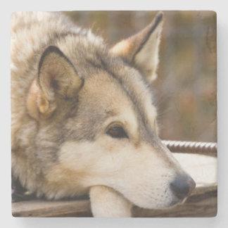 N.A., USA, Alaska. Husky sled dogs at 3 Stone Coaster