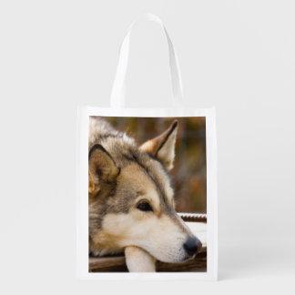 N.A., USA, Alaska. Husky sled dogs at 3 Market Tote
