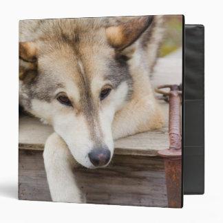 N.A., USA, Alaska. Husky sled dogs at Binder