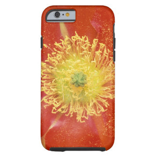 N.A., USA, Arizona, Casa Grande, NM, Desert Tough iPhone 6 Case