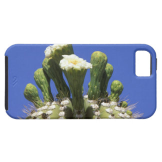 N.A., USA, Arizona, Tucson, Sonora Desert 2 iPhone SE/5/5s Case