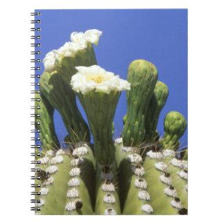 N.A., USA, Arizona, Tucson, Sonora Desert 2 Notebook