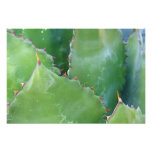 N.A., USA, Arizona, Tucson, Sonora Desert 2 Photo Print