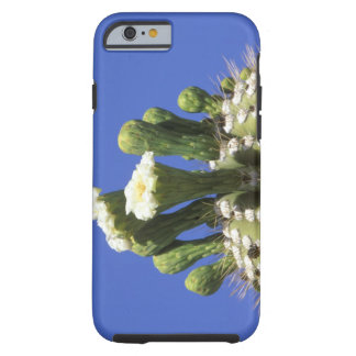 N.A., USA, Arizona, Tucson, Sonora Desert 2 Tough iPhone 6 Case