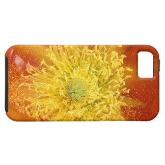 N.A., USA, Arizona, Tucson, Sonora Desert 3 iPhone 5 Case