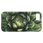 N.A., USA, Arizona, Tucson, Sonora Desert iPhone 5 Case