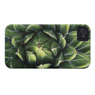 N.A., USA, Arizona, Tucson, Sonora Desert Case-Mate iPhone 4 Case