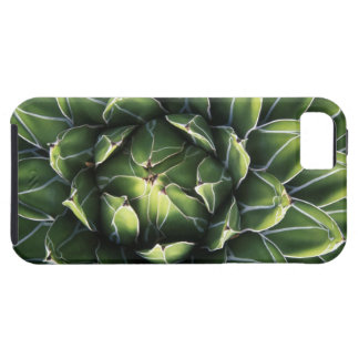 N.A., USA, Arizona, Tucson, Sonora Desert iPhone SE/5/5s Case