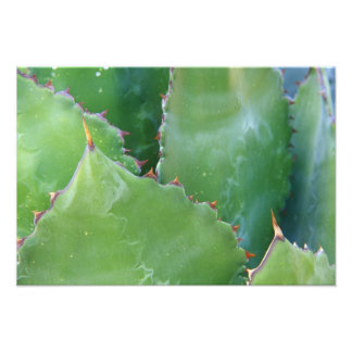 N.A., USA, Arizona, Tucson, Sonora Desert Photo Print