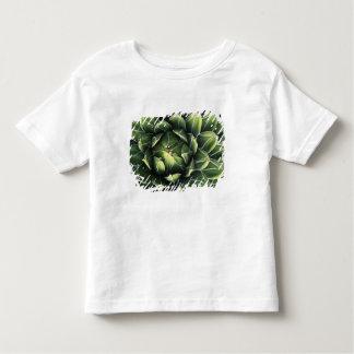 N.A., USA, Arizona, Tucson, Sonora Desert Shirt