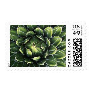 N.A., USA, Arizona, Tucson, Sonora Desert Stamp