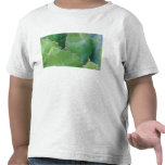 N.A., USA, Arizona, Tucson, Sonora Desert T-shirts