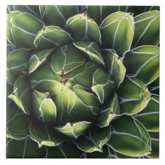 N.A., USA, Arizona, Tucson, Sonora Desert Large Square Tile
