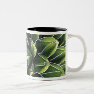 N.A., USA, Arizona, Tucson, Sonora Desert Two-Tone Coffee Mug