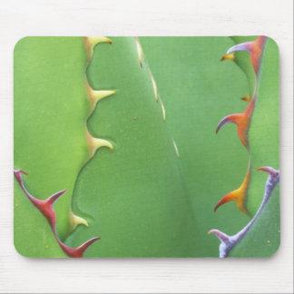N.A., USA, AZ, Phoenix, Desert Botanical 2 Mouse Pad