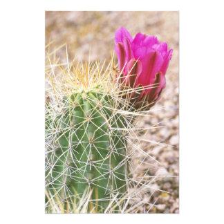 N.A., USA, AZ, Phoenix, Desert Botanical 2 Photo Print