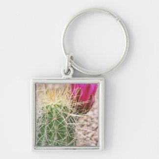 N.A., USA, AZ, Phoenix, Desert Botanical Key Chain