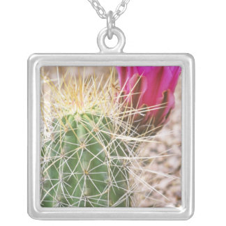 N.A., USA, AZ, Phoenix, Desert Botanical Silver Plated Necklace