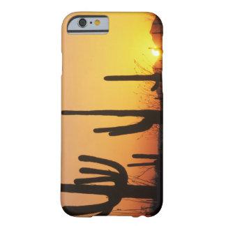 N.A., USA, AZ, Saguaro NP, Saguaro Sunset Barely There iPhone 6 Case
