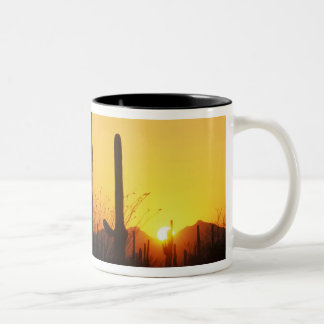 N.A., USA, AZ, Saguaro NP, Saguaro Sunset Two-Tone Coffee Mug