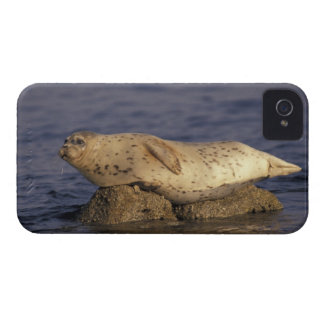 N.A., USA, California, Monterey.  Harbor Seal iPhone 4 Cover