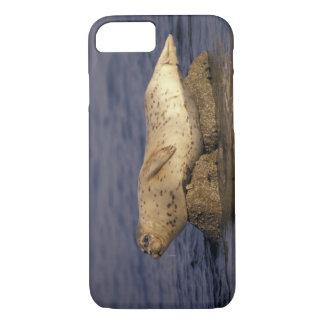 N.A., USA, California, Monterey.  Harbor Seal iPhone 7 Case