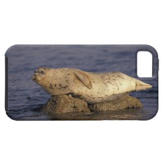 N.A., USA, California, Monterey.  Harbor Seal iPhone SE/5/5s Case