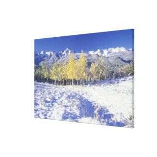 N.A., USA, Colorado, San Juan Mts Fresh snow Canvas Print